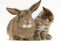 cute kitties / by Pam Hunt