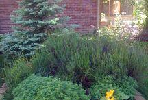 How My Garden Grows / by Jill Janson