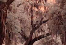 Breath taking tree's in bloom / by Gloria Wise