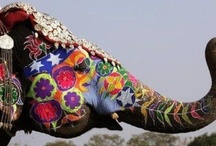 Trunk Show / Elephants are the best; one of God's loveliest creatures. / by Ashley Ridgway