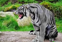 Big Cat Country...and other animals as well.  / by Jonielle Coplin