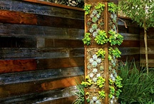 garden / by Megan Helm