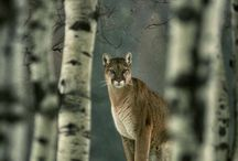 Wild & dangerous but oh so beautiful  / Wildlife / by Lori Speck