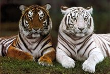 awesome animals / by Joann Corsin Liszewski