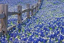 Texas / by Matthew Fisher