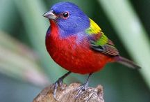 Birds / by Hari Palta, Ph.D.