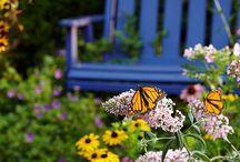 In the garden / by Katherine Johnson