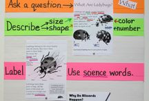 anchor charts / by Penny Lundquist