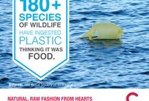 Eco Fact Friday  / by Hearts