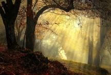 Nature in all her GLORY! / by Sandi Lundberg