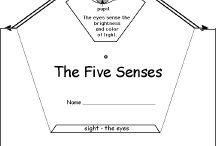 5 senses / by Katie @ Gift of Curiosity