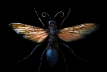 Bug Beauty / Bugs are generally scary, but these inspire me. / by Toni Yvonne