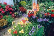 Gardening/Flowers / by Jessie Mitchell