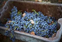 Harvest / by Rodney Strong Vineyards