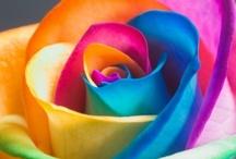 flowers / by Linda Minor