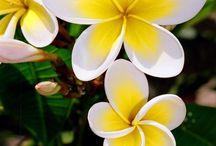 Maui / by C B