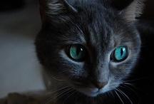 Fabulous Felines >^..^< Domestic / by Maggie Ward