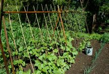 Gardening and Other Outdoorsy Stuff / by Lindsay McCarthy