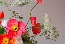 Flora / by Dulcie Emerson