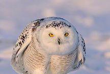 my owl spot / by Mandy Wright