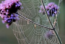 Webs and Weavers / by Catherine Wadhams
