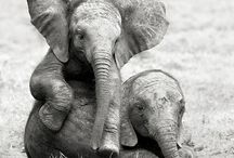 Animals / by Lucy Bobbitt