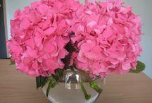 Flowers:) / by Elizabeth Windon