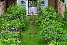 VEGETABLE GARDENS / by The Sustainable Life