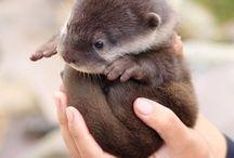 Awww Otters / by Katherine