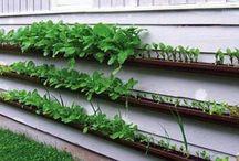 Gardening / by Debi Fuell