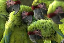I Love Green... / by Shirlee Harris