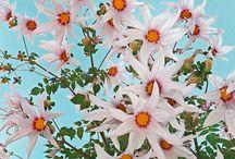 Garden / by Kelley Barrios