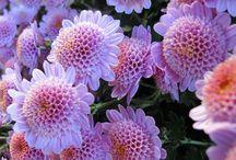 Pretty Flowers / by Gail Gundrum