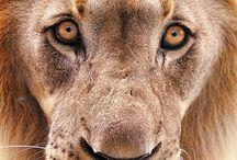 ferocious animals / by Brenda Hawkins