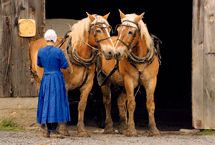 Amish Life / by Debra Taylor