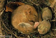 Nature of Hibernation / by Deb Toor