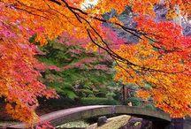 All Things Japanese... / I love Japan / by Pamela McMillan