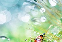 Silence Pulse _ photography_Bokeh, Miniature, .. / by Rosa Chaves