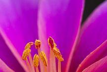Flores / by Fran Mendez