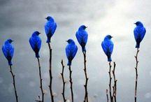 Birds / by Deborah Fisher