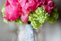flowers / by Maria Loreto Olave Gonzalez