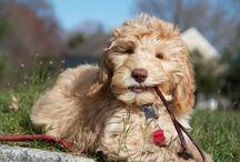 Dogs and Puppies / Loyalty and Unconditional Love Make a Dog the Perfect Companion. / by gladysclancy