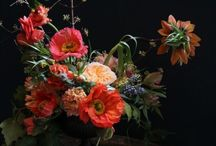 floral board: poppies  / by The Perfect Petal