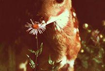 Animals / by Carol Heriford