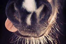 Animals  / by Alison Phalen