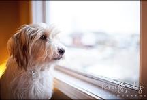 Dog Photography Blogs / by Bari Boisvert