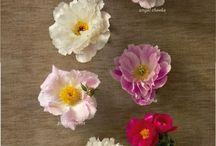 Fleur / by Kelsie Kikuchi