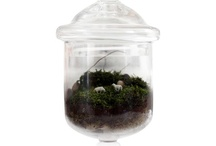 Terrariums / by Crystal Shumaker