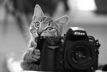 Camera Craze / by Carolyn Hutson