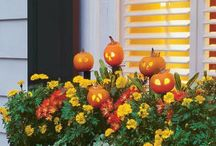 Fall, Halloween, & Thanksgiving / by Cottage Castle